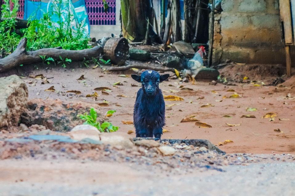 Boti (Ghana)