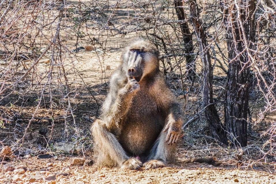 Kruger National Park (South Africa)