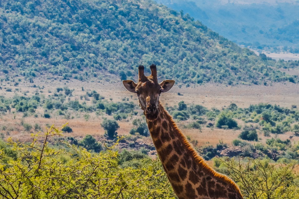 Pilanesberg (South Africa)