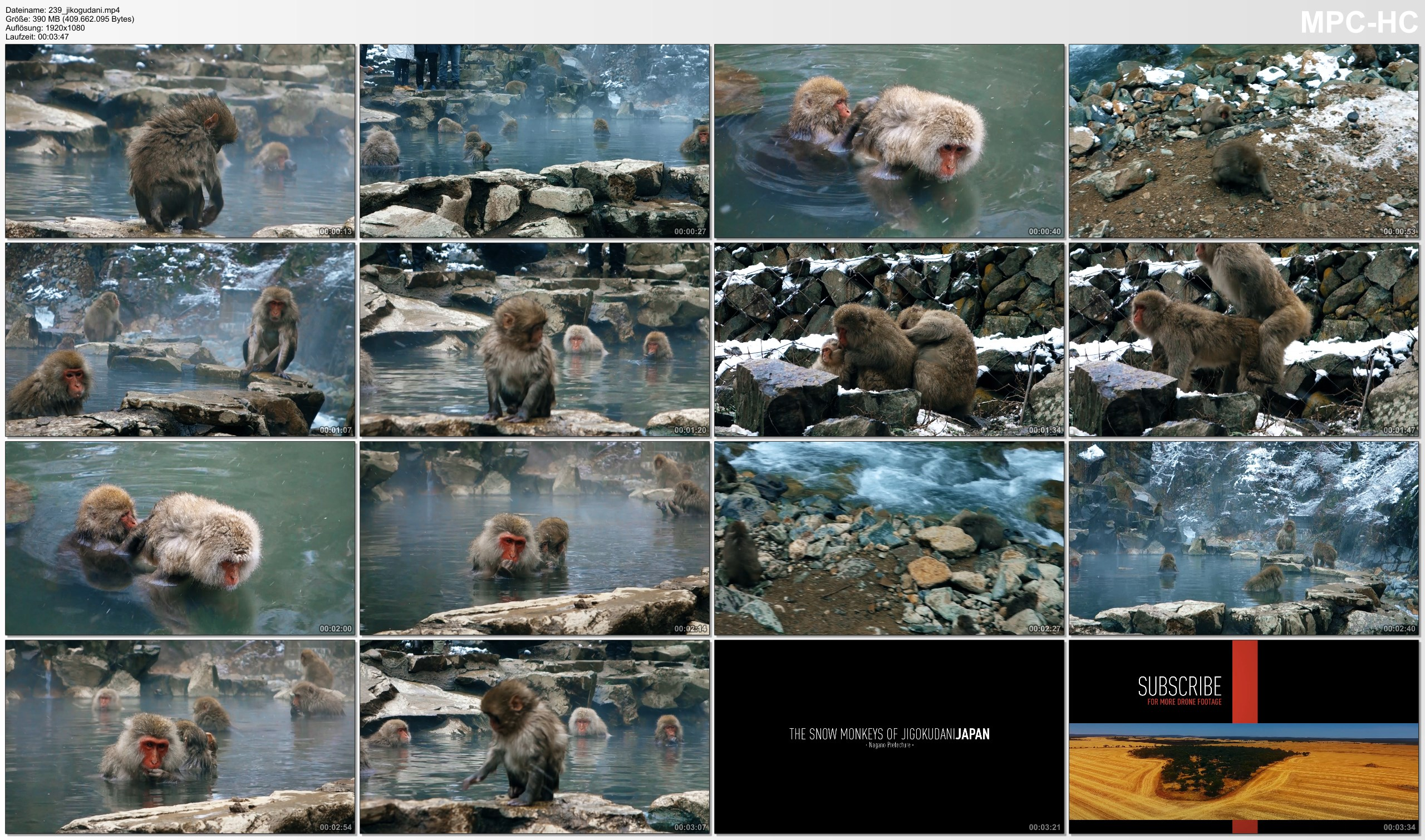 Pictures from Video 【1080p】Footage | Jigokudani SNOW MONKEYS 2019 ..: Japanese Macaques | Hot Bath in Nagano Monkey Park