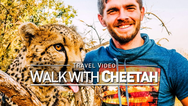【1080p】Footage | Walking with a CHEETAH 2019 ..:: Lion & Safari Park @Johannesburg, South Africa